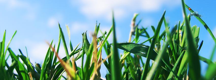 fb-banner-grass